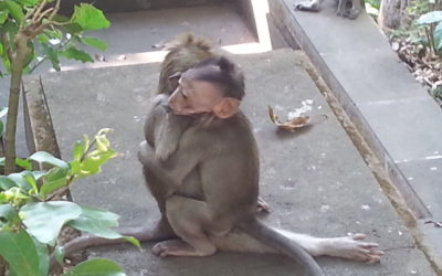 Ubud Monkey Forest | Bali, Indonesia